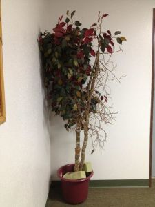 deleaved tree