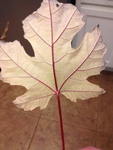 pretty leaf